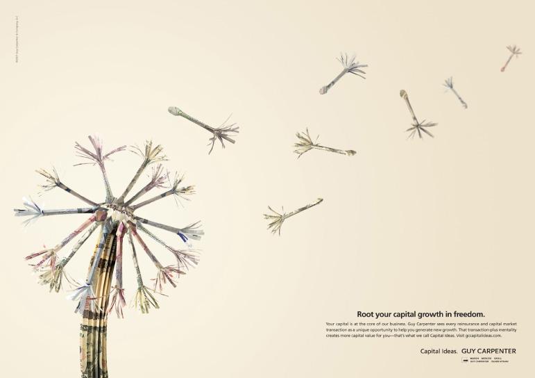 guy-carp-dandelions